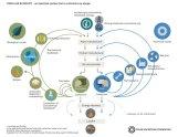 circular-economy-diagram_foundation_feb2015-01.png__750x0_q85_subsampling-2_upscale_width-750